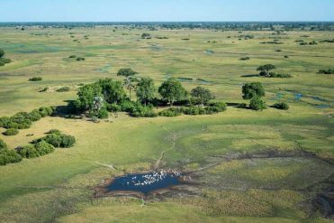 Why Botswana's Gone Green
